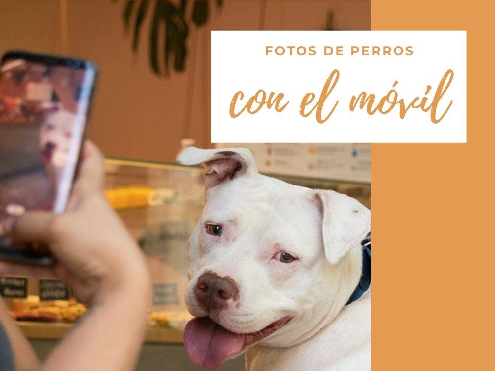 Cómo hacer mejores fotos de tu perro con el móvil