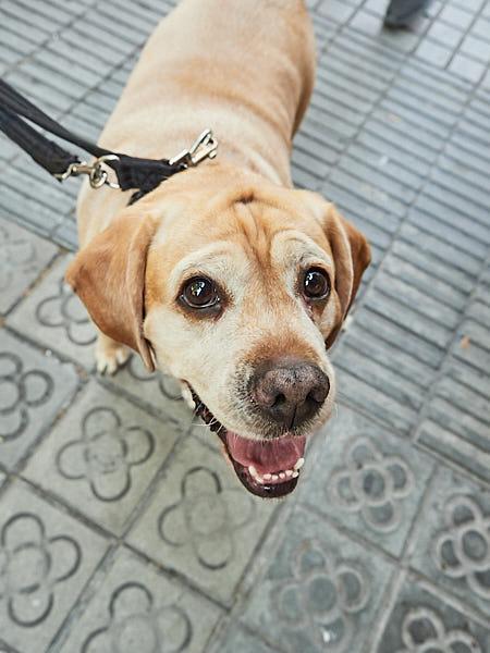 Evento canino en Barcelona