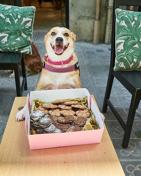Galletas caninas para un evento de perros en Barcelona