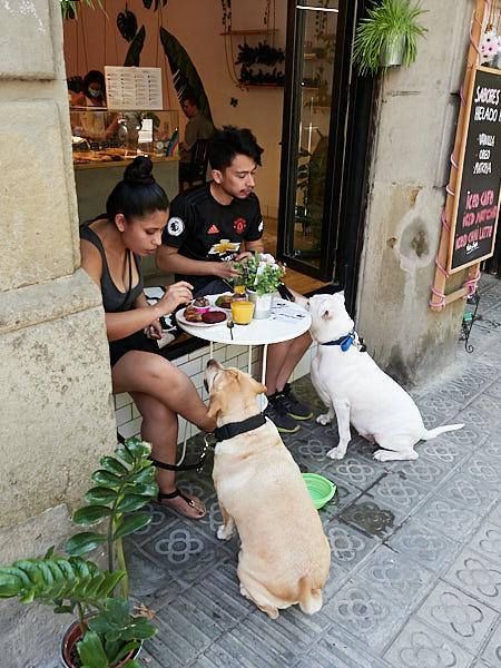 perros en Cookona en Barcelona