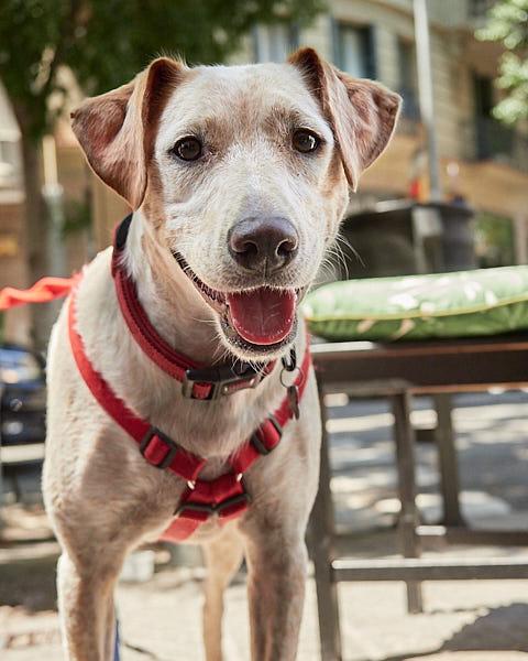 Actividad para perros en Barcelona