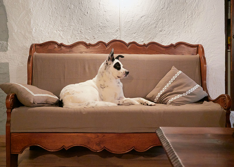 Perro blanco y negro en el sofá en Mas Els Plans durante San Juan