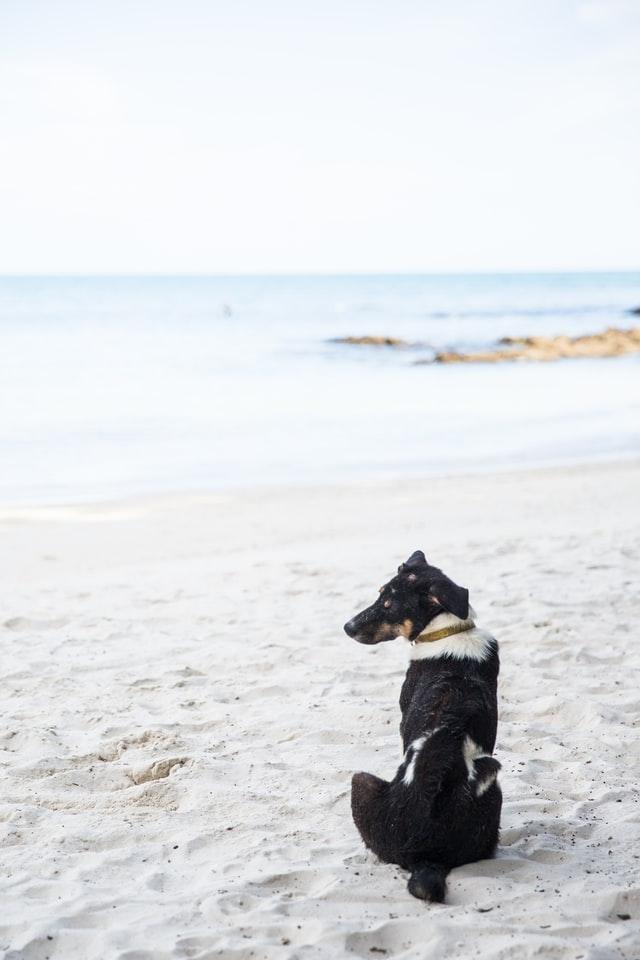 Perro blanco y negro en una playa canina, Punta del Riu, cerca de Tarragona