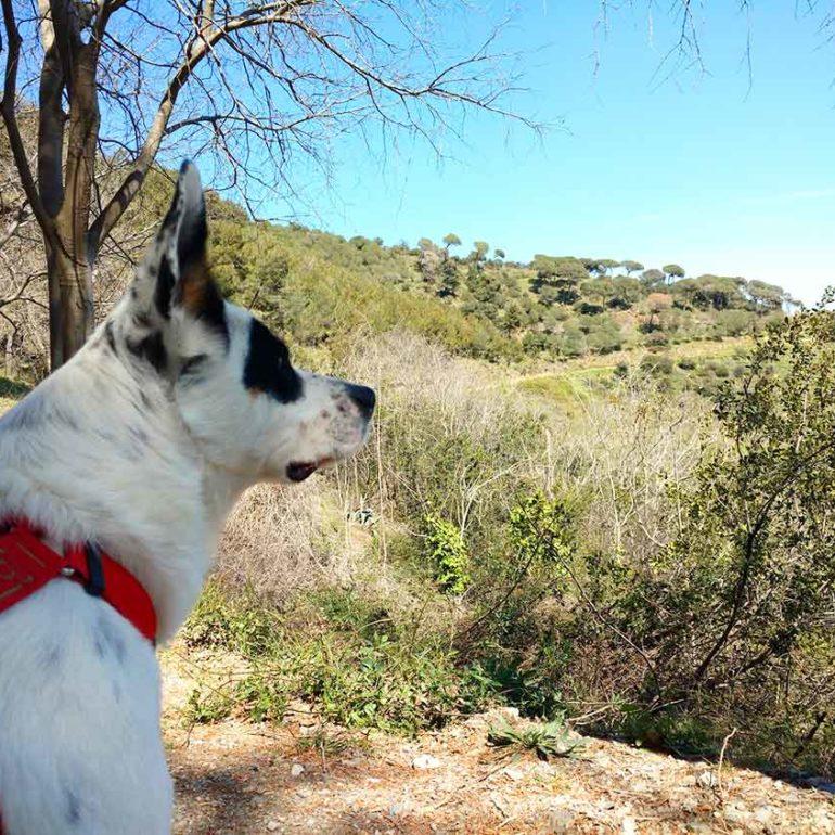 Perro blanco y negro en la Carretera de les Aigües en Barcelona