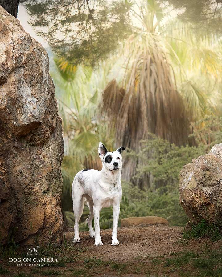 Perro mestizo en el parque Turo de la Peira en Barcelona