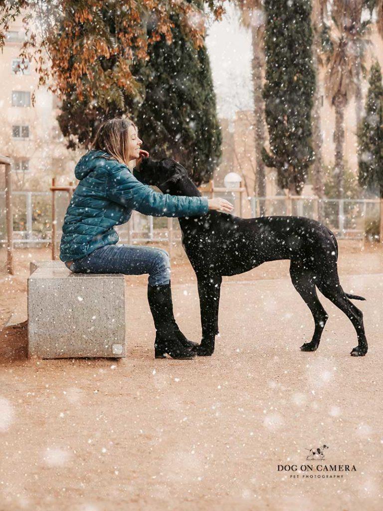Sesión de foto de un cachorro de gran danés en la nieve en Barcelona