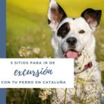 5 sitios para ir de excursión con tu perro en Cataluña y cerca de Barcelona