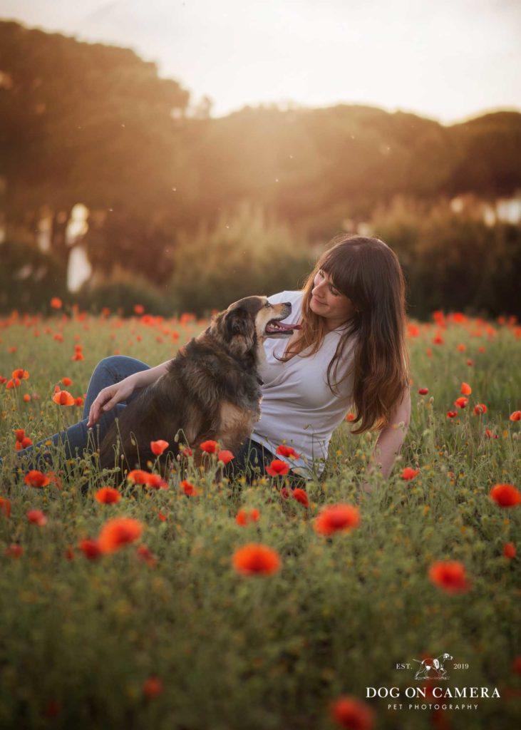 Una perra posando en el campo de amapolas en Cataluña, cerca de Barcelona