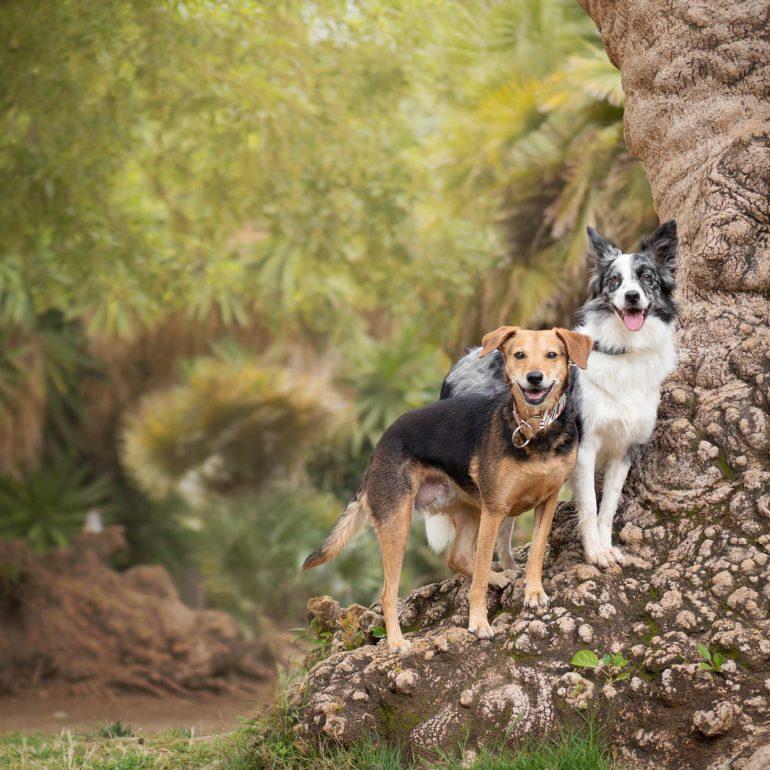 Perro mestizo y border collie en un tronco de árbol en parque de Ciutadella en Barcelona