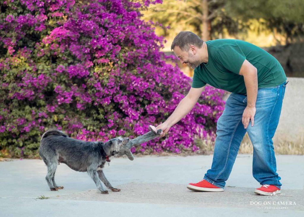Prepara tu perro para la sesión de fotos - perro pequeño jugando con un juguete y con flores rosas en el fondo